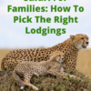 A Masai Mara Safari For Families: How To Pick The Right Lodgings