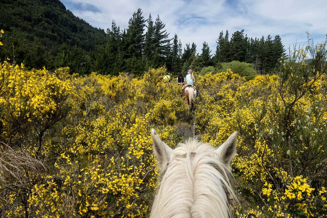The 5 Best Places to Horseback While on Vacation