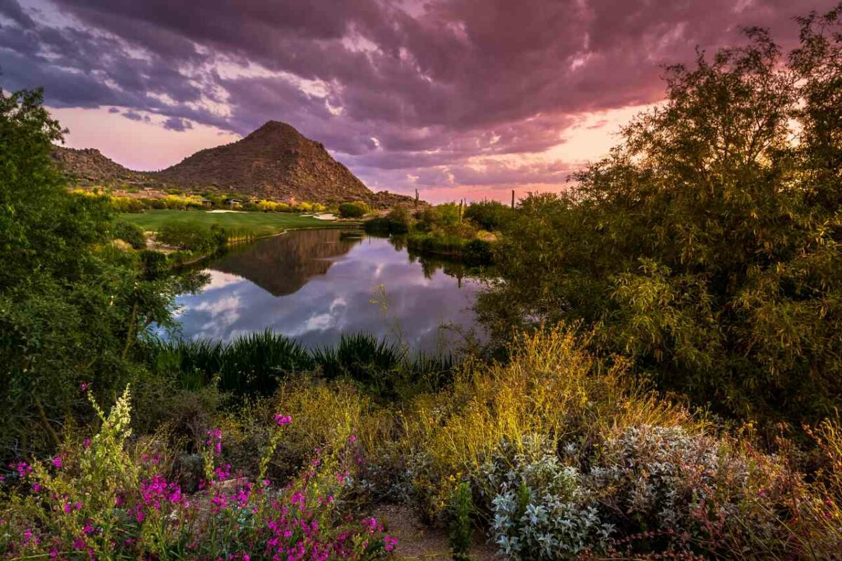 Sonoran Desert in Bloom near Scottsdale, Arizona