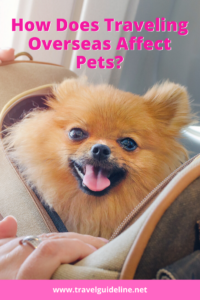 How Does Traveling Overseas Affect Pets?