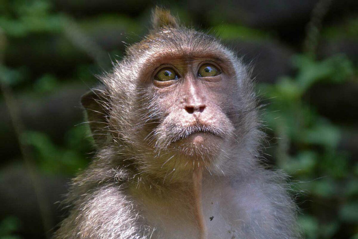 Bali, Indonesia Wildlife