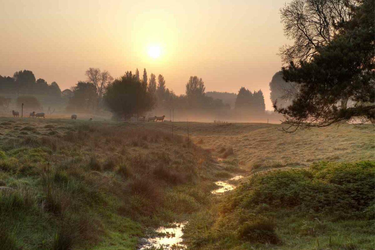 Cotswolds Mist