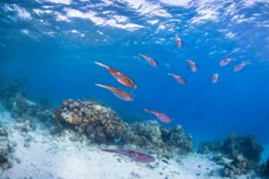Must-See Attractions in Honduras