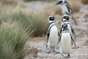 Patagonian Wildlife - What to See and Where to See It