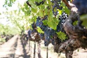 Napa Valley - Must-Visits for First Timers