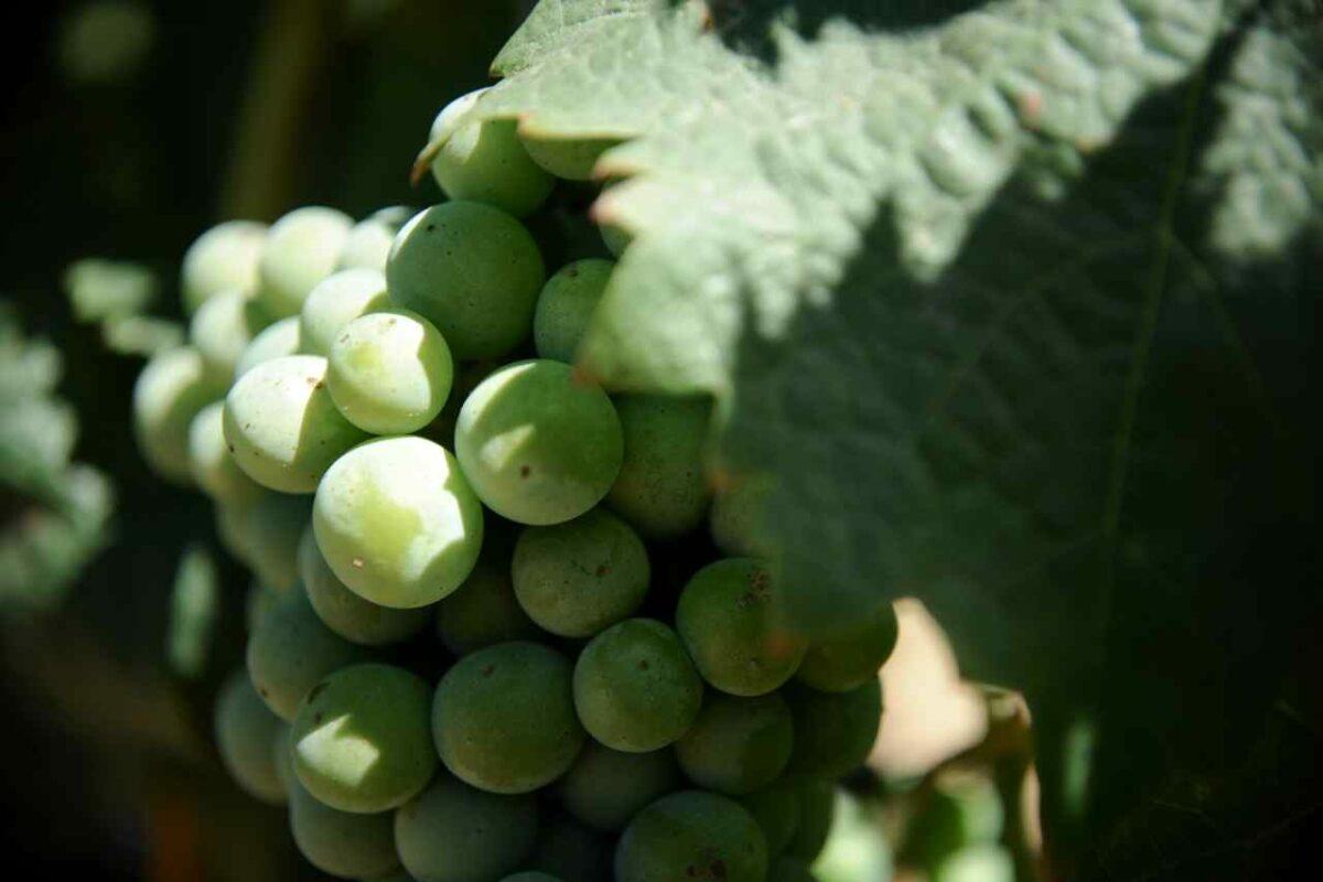 North Carolina Wine Country
