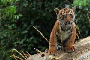 Top 3 Places for Animal Lovers in London