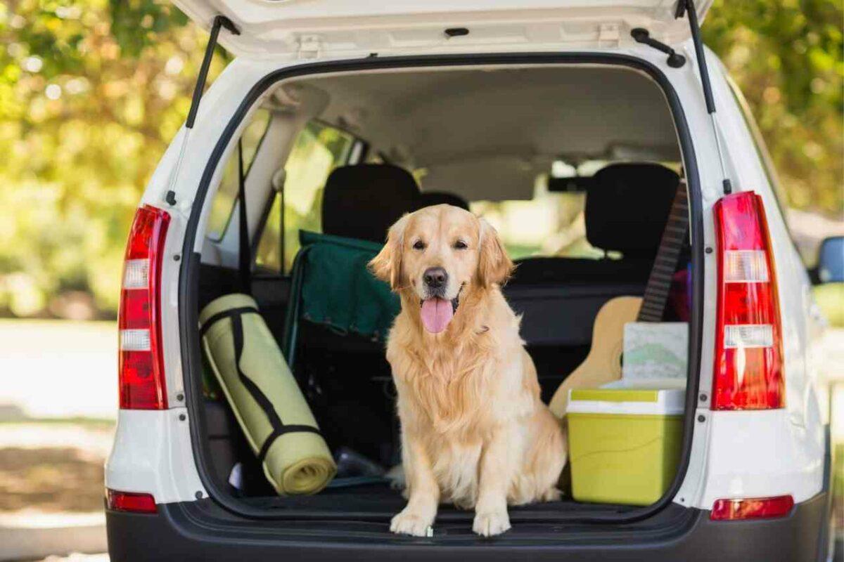 dog in SUV