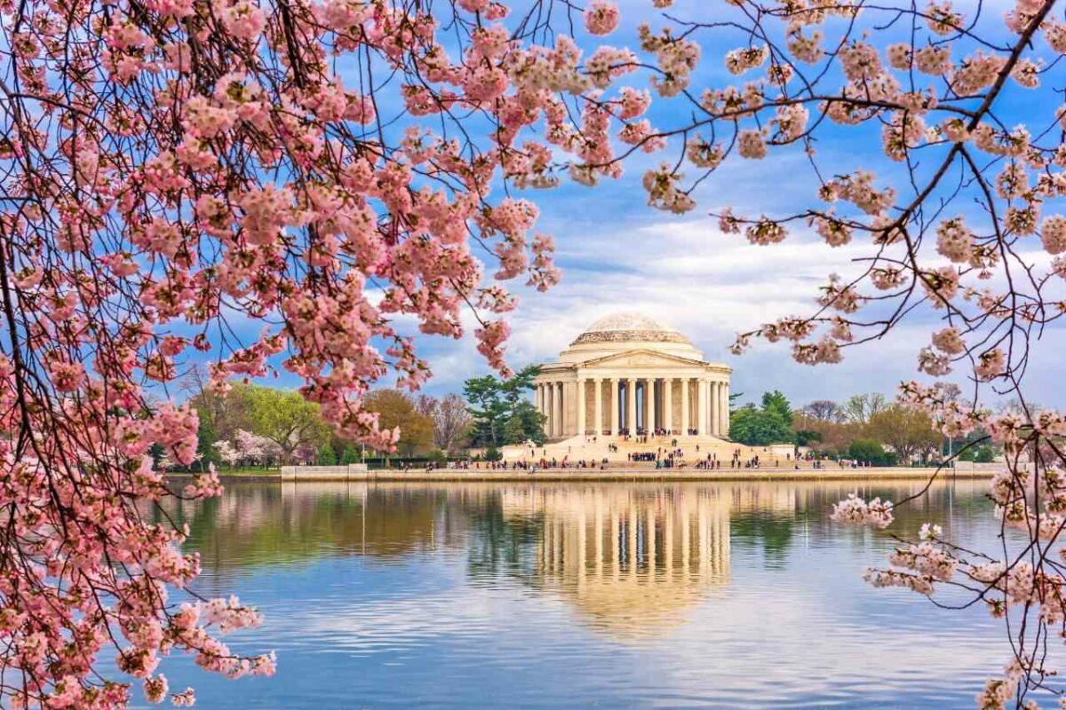 Jefferson Memorial in Washington, DC framed by cherry blossoms