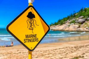Discovering Spain: How to Avoid Bug Bites and Jellyfish Stings