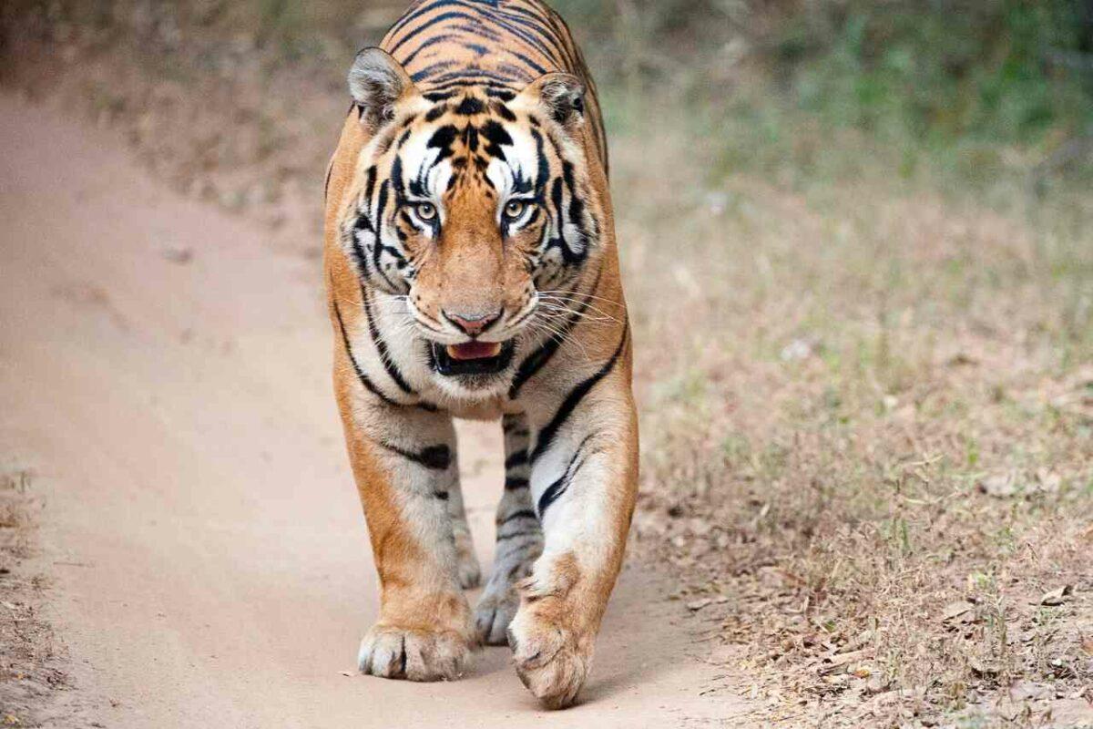 Tiger Den Resort, Bandhavgarh