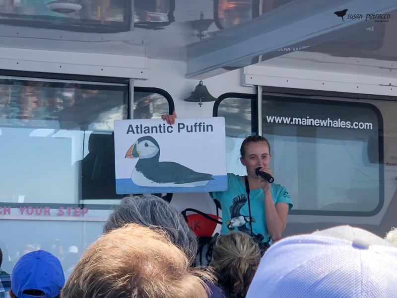 Audubon society speaker teaching us about puffins