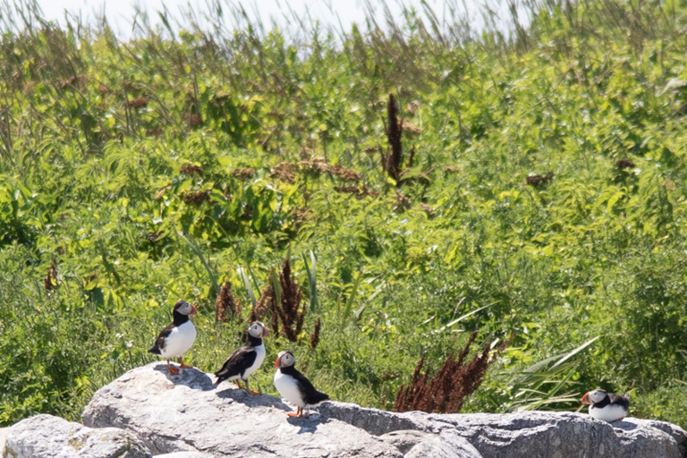 Cap'n Fish's Cruises – See Puffins in Boothbay Harbor, Maine