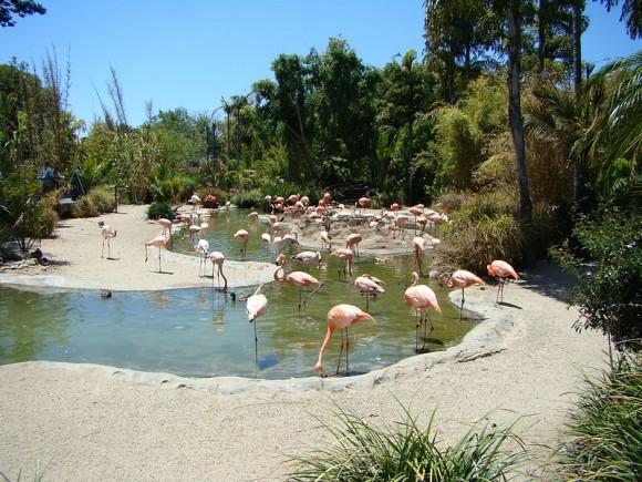Flamingos at Safari Park