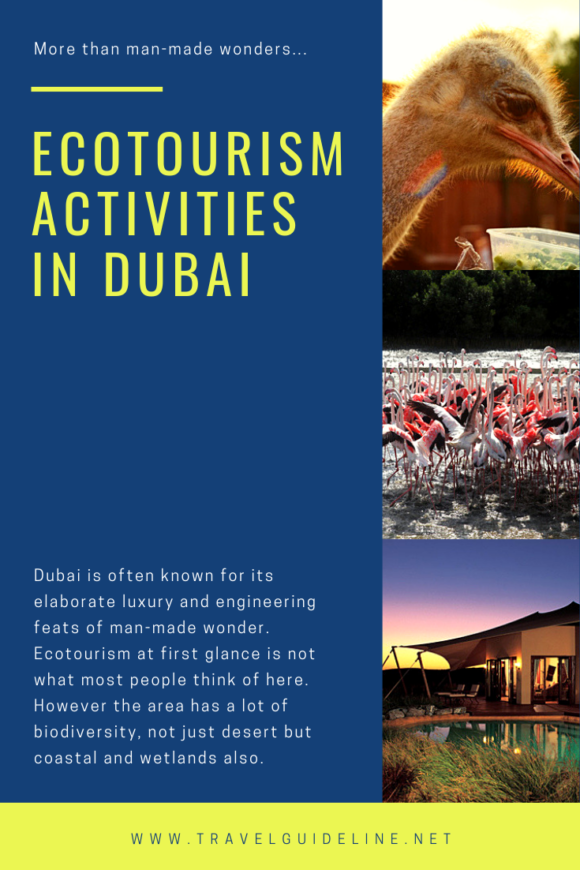 Dubai is often known for its elaborate luxury and engineering feats of man-made wonder. Ecotourism at first glance is not what most people think of here. However the area has a lot of biodiversity, not just desert but coastal and wetlands also.