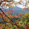 Great Smoky Mountains National Park Fall Trees